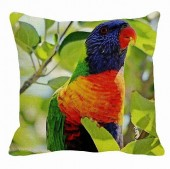 Rainbow_Lorikeet_Local.jpg