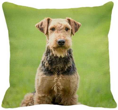 Airedale Sitting