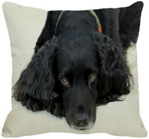Black Cocker Spaniel Laying Down