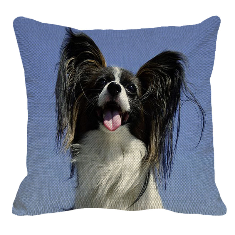 Black and White Papillion
