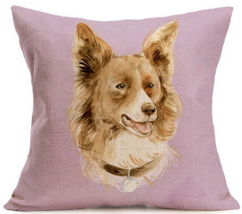 Brown Border Collie_resize