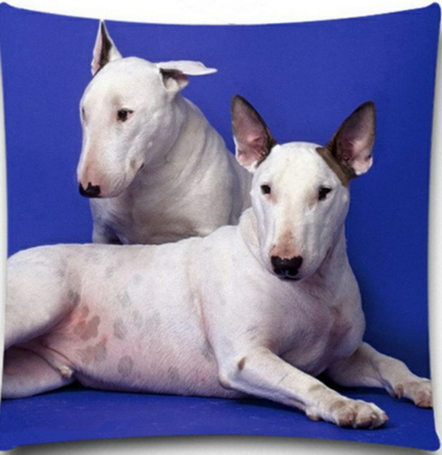 Bull Terrier Buddies