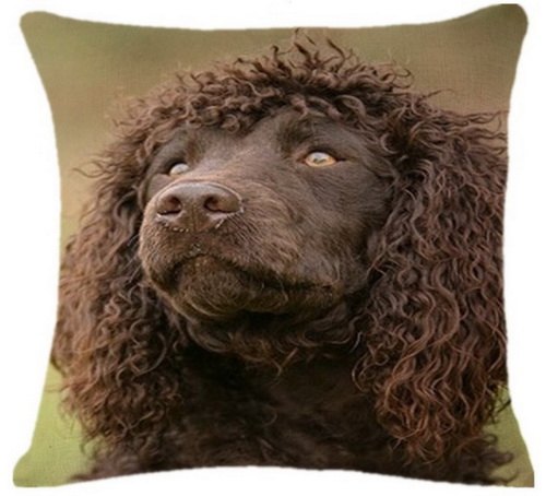 Curly Haired Retreiver Head_resize
