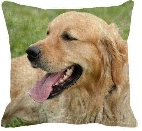 Golden Retriever Happy