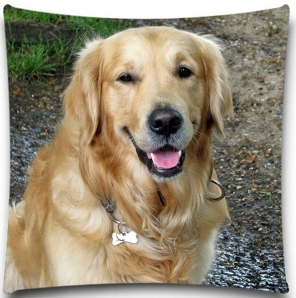 Golden Retriever On River Bed