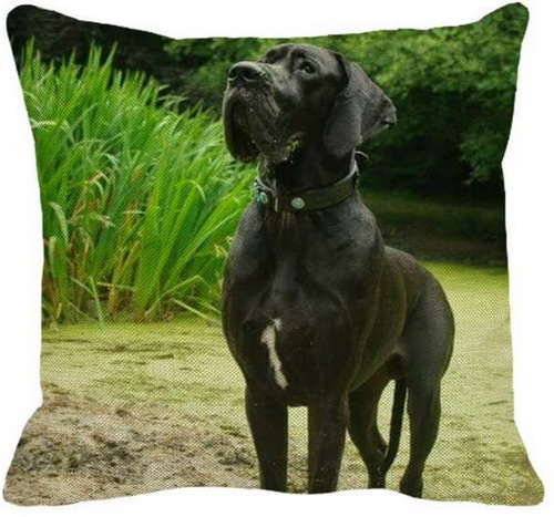 Great Dane Black Standing