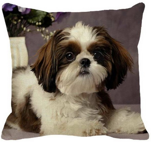 Shih Tzu on Purple